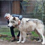 <br><br><br>20.07.2018 – Themenabend: Der Wolf vor unserer Haustür